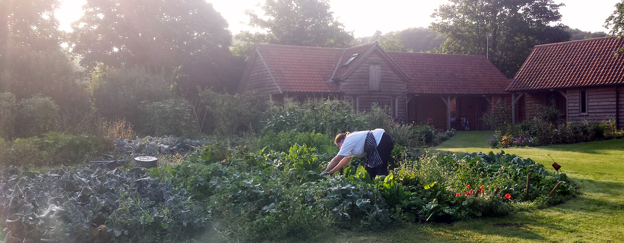 Picking fresh, Grove produce.
