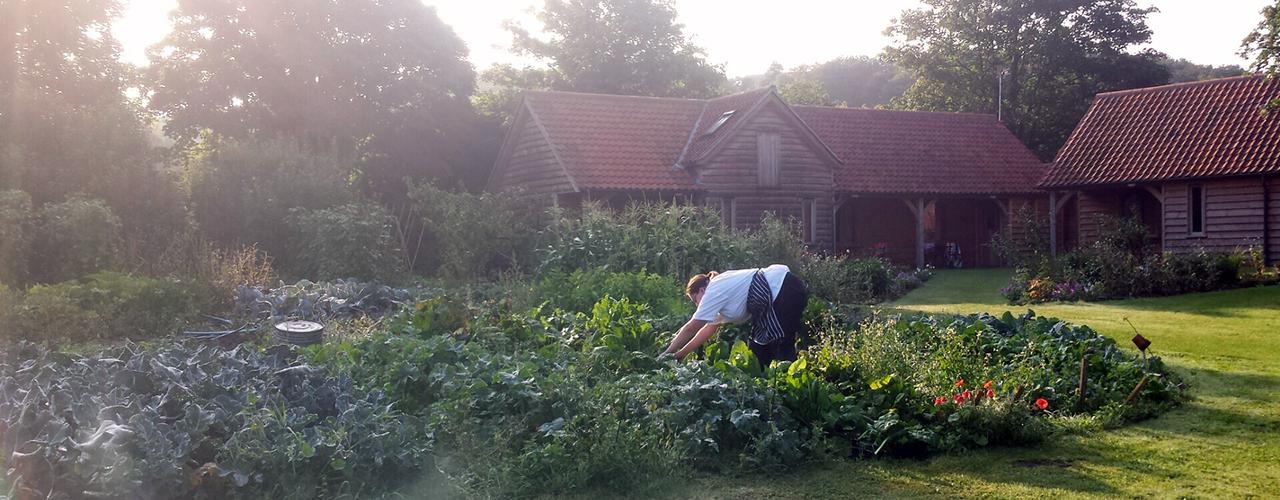 Picking fresh, Grove produce.